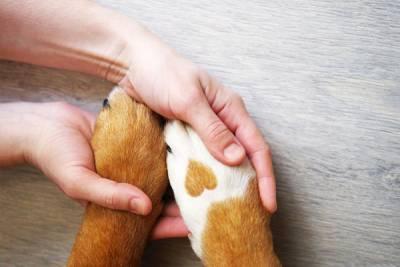Veterinary Clinics